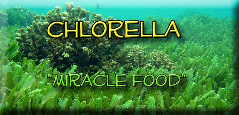 Chlorella Miracle Food Health Anti Aging Wellness